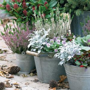Idee per il giardino di inverno - Giardino di inverno ...